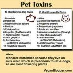 Protecting Pets from Poisons