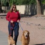 10 Reasons You Should Hire a Professional Pet Sitter