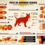 Prevent Heat Exhaustion and Heat Stroke for your Pets