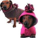 Caring For Your Pets During Cold Winter Months