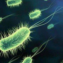 Probiotics Found in Scottsdale Pet Stores
