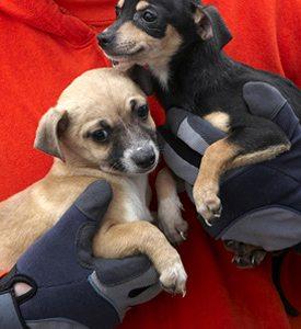 dogs-rescue-275x300
