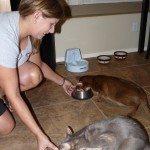 Pet Sitting Services – Gilbert – Chandler, AZ