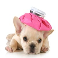 Spay and Neuter for Dogs: What You Need to Know