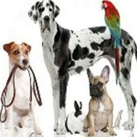 Arizona Pet Sitter TLC
