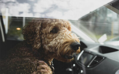 Alternatives to Leaving Pets in the Car