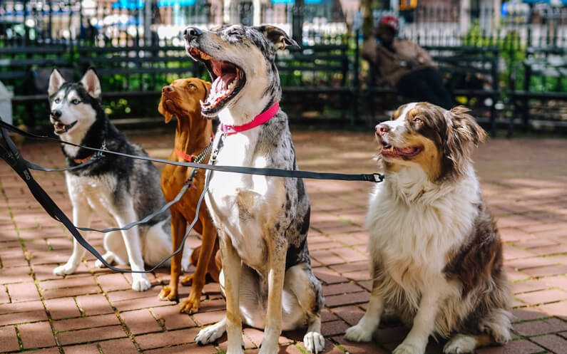5 Top Reasons to Hire a Midday Dog Walker