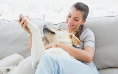 How to be Well-Prepared for a Pet-Sitting Job