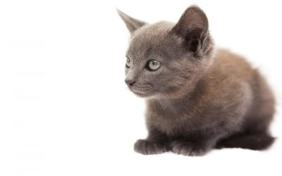 What a Pet Sitter Should Do in their First Meeting with the Pet Owner