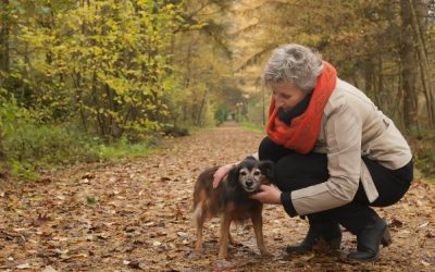 5 Tips for Pet Care While You're Away on Vacation