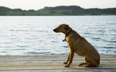 How to Care for a Pet while Pet-sitting
