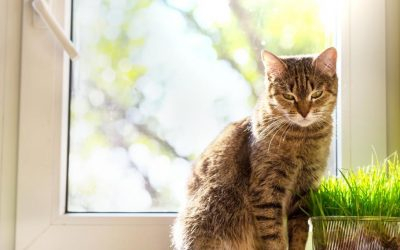 4 Mistakes to Avoid when Pet-sitting