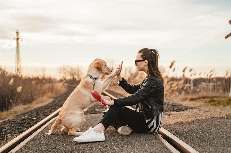 hire a professional pet sitter