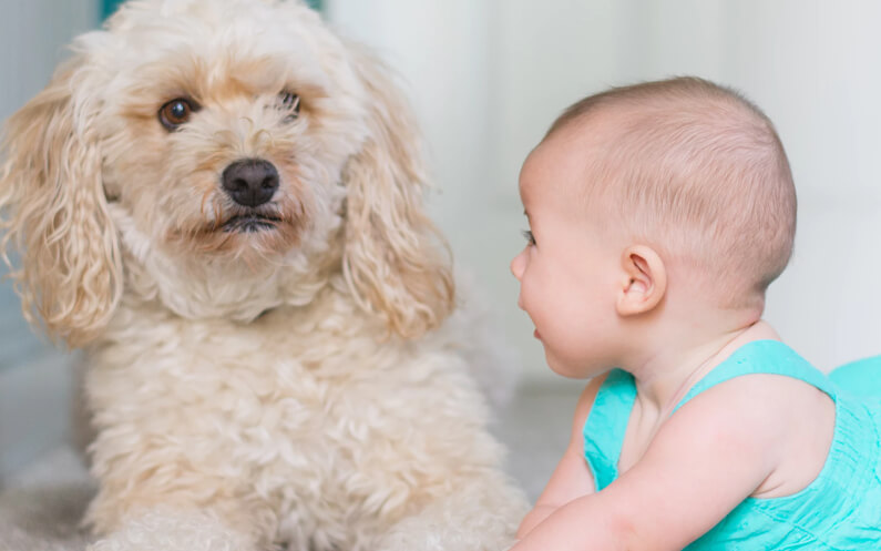 Introducing Your Dog to Your New Baby