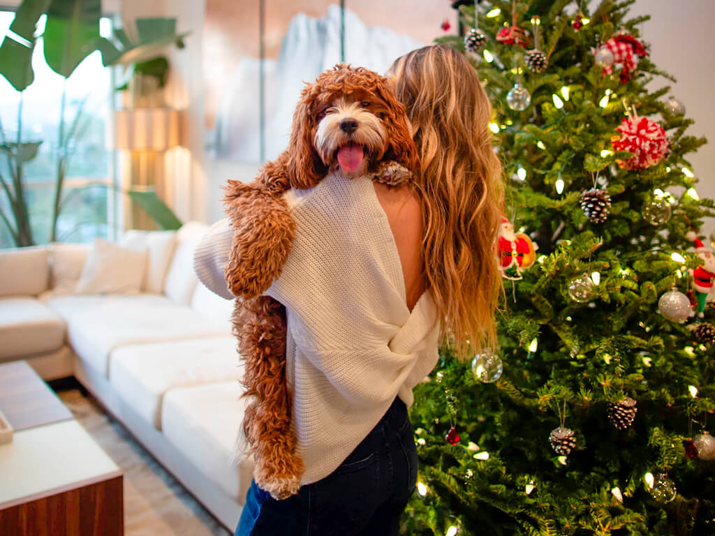 Christmas decorations for pets