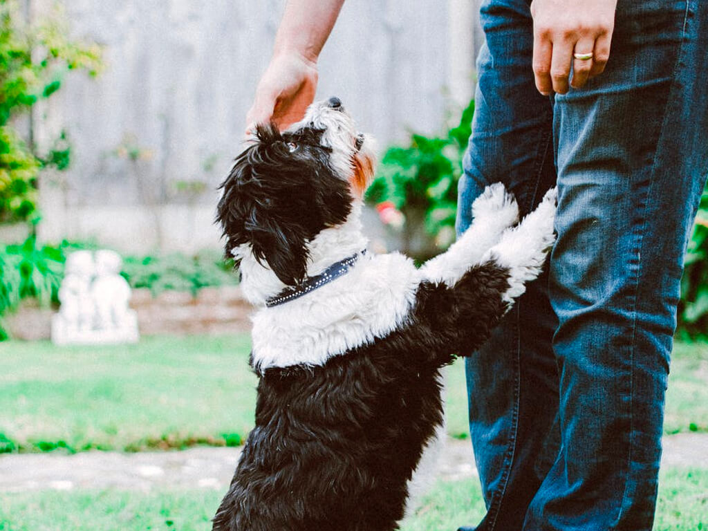 what to avoid when adopting a dog