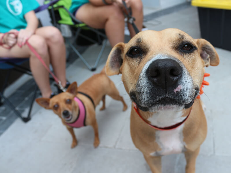 Empty the Shelters During the Holidays